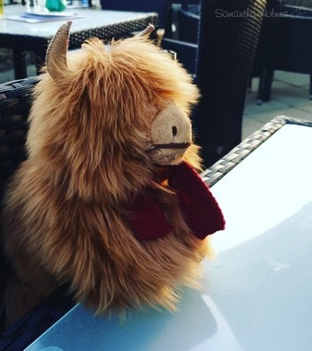 PRE-ORDER Benedict The Highland Cow